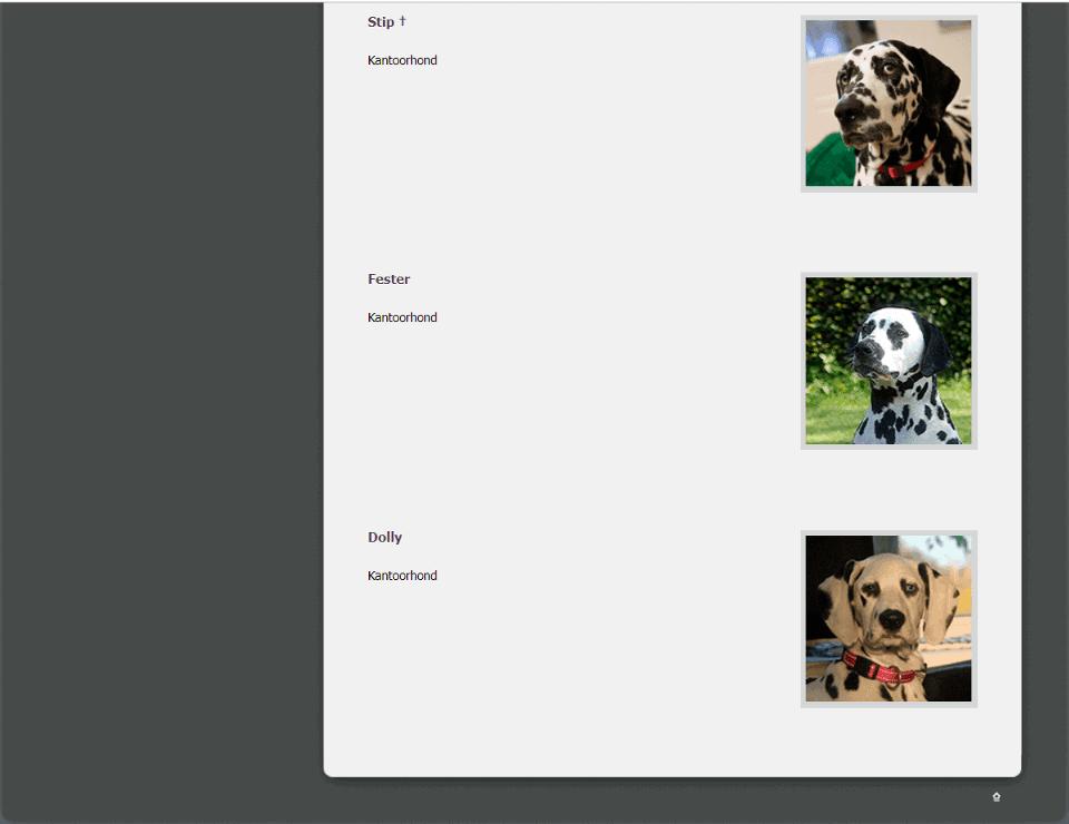 Bij dit bedrijf hebben ze niet 1, maar meerdere kantoorhonden.